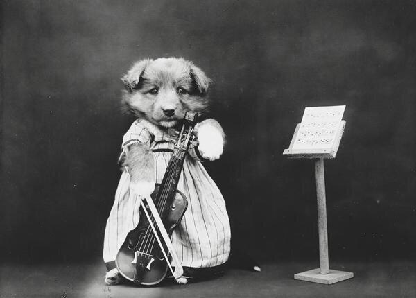 ภาพโบราณ100ปี..หมาแมวแต่งตัวย้อนยุค ..คนถ่ายช่างอินเทรนจริงๆ 27 - pet