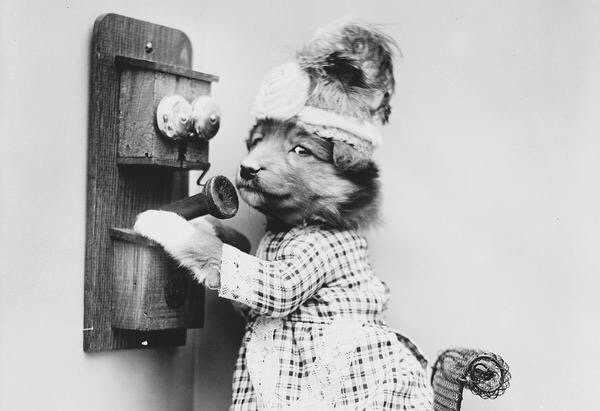 ภาพโบราณ100ปี..หมาแมวแต่งตัวย้อนยุค ..คนถ่ายช่างอินเทรนจริงๆ 17 - pet