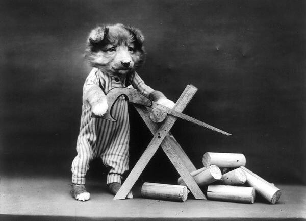 ภาพโบราณ100ปี..หมาแมวแต่งตัวย้อนยุค ..คนถ่ายช่างอินเทรนจริงๆ 25 - pet