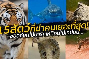 สัตว์อะไรฆ่าคนตายเยอะสุดในโลก? ลองทายก่อนเปิดโพสต์นี้