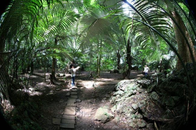 IMG 0207 750x500 หุบป่าตาด ป่าดึกดำบรรพ์ในอุทัยธานีที่ค้นพบสิ่งมีชีวิตชนิดใหม่ของโลก