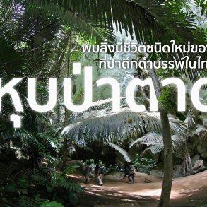 หุบป่าตาด ป่าดึกดำบรรพ์ในอุทัยธานีที่ค้นพบสิ่งมีชีวิตชนิดใหม่ของโลก 16 - forest