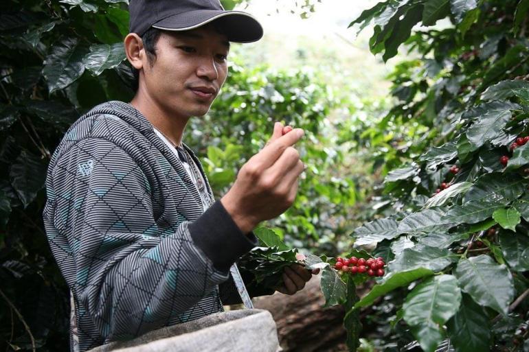 ทำความรู้จักการเกษตรยุค 4.0 คืออะไร? และพบตัวอย่างเกษตรกรรุ่นใหม่ คุณอายุ จือปา จากเด็กดอยสู่เจ้าของแบรนด์กาแฟระดับโลก 15 - dtac (ดีแทค)