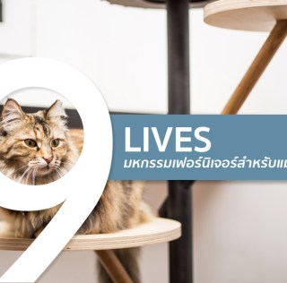 ทาสแมวต้องร้องว้าว งานแสดงเฟอร์นิเจอร์สำหรับแมวโดยเฉพาะ
