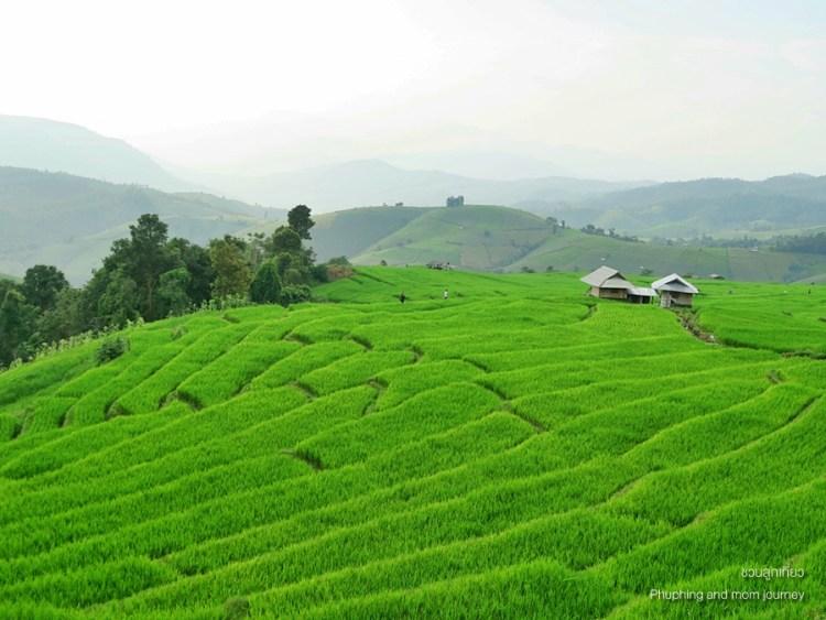 papongpieng9 750x563 เสพวิวหลักล้านที่บ้านป่าบงเปียง สุดยอดนาขั้นบันไดของเมืองไทย