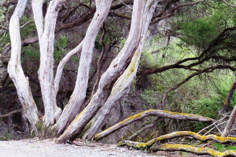 อุทยานความร้อนใต้พิภพ Wai-O-Tapu หนึ่งในสถานที่อัศจรรย์ เหนือจริง ของโลก 33 - Wai-O-Tapu