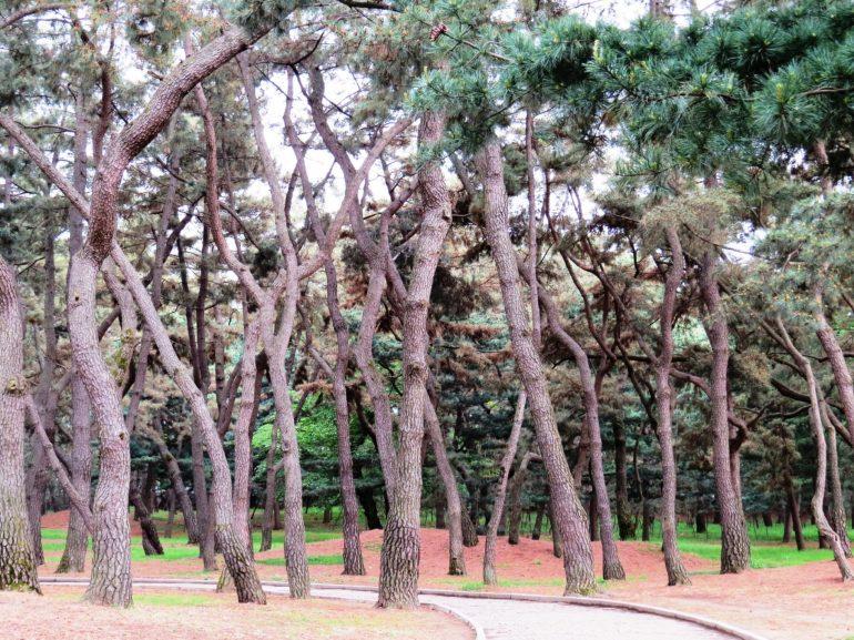 คยองจู (Gyeongju) เกาหลีใต้ เมืองเล็กกลางหุบเขา อดีตเมืองหลวงอาณาจักรชิลลา 18 - คยองจู