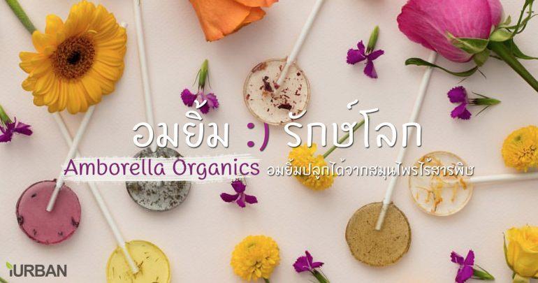 "Amborella Organics ""อมยิ้มห่วงใยโลก"" สีหวาน ปลูกได้ เบ่งบานเป็นต้นสมุนไพร 13 - Amborella Organics"