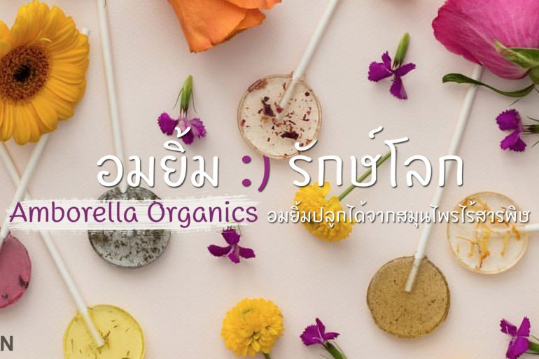 "Amborella Organics ""อมยิ้มห่วงใยโลก"" สีหวาน ปลูกได้ เบ่งบานเป็นต้นสมุนไพร 13 - Green"