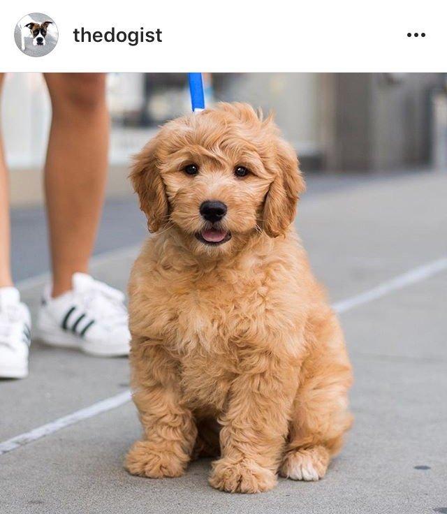 thedogist2 10 Instagram Accounts ไอจีคอนเทนต์ดี๊ดี ที่ควรค่าแก่การฟอลโล่!!