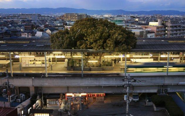 สถานีรถไฟญี่ปุ่นเจาะสถานีเพื่อรักษาต้นไม้อายุ 700 ปี 13 - tree