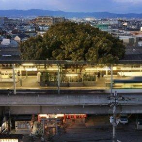 สถานีรถไฟญี่ปุ่นเจาะสถานีเพื่อรักษาต้นไม้อายุ 700 ปี 22 - tree