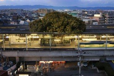 สถานีรถไฟญี่ปุ่นเจาะสถานีเพื่อรักษาต้นไม้อายุ 700 ปี 16 - GREENERY