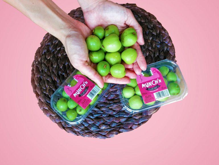 Munch'n kiwiberries - ซูเปอร์ฟรุตขนาดจิ๋วสุดคิ้วท์พันธุ์ใหม่มาถึงเมืองไทยแล้ว! 13 -