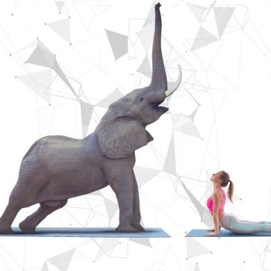Gentle Giant Yoga at the 2018 King's Cup Elephant Polo Tournament 16 -