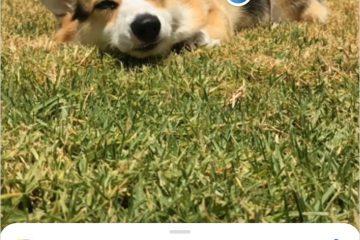 ฟังก์ชั่นกล้อง Xperia XZ2 รองรับฟีเจอร์ Google Lens แล้ววันนี้ 8 -