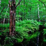 สายเดินป่าต้องรู้! 5 กิจกรรมเดินป่าอย่างไร ไม่รบกวนธรรมชาติ 84 - Environment