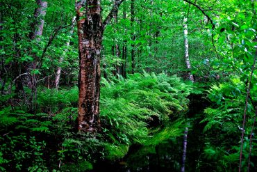 สายเดินป่าต้องรู้! 5 กิจกรรมเดินป่าอย่างไร ไม่รบกวนธรรมชาติ 9 - rocking chair