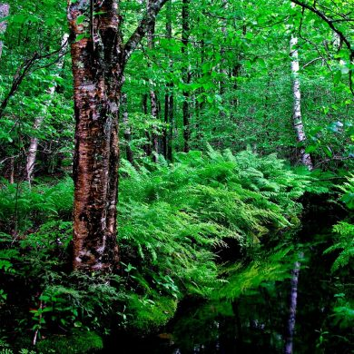 สายเดินป่าต้องรู้! 5 กิจกรรมเดินป่าอย่างไร ไม่รบกวนธรรมชาติ 26 - Environment