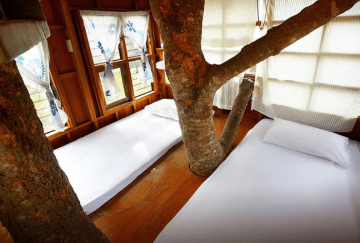 pai treehouse resort 1 20 ที่พักปาย ท้าลมหนาว อยากฟินต้องบินไปนอน