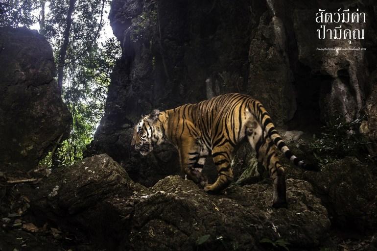 """ปลูกจิตสำนึกอนุรักษ์ธรรมชาติ กับนิทรรศการภาพถ่าย """"สัตว์มีค่า ป่ามีคุณ"""" @ เดอะมอลล์ บางกะปิ 13 -"""