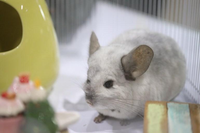 ขอเชิญชวนคนรักสัตว์เที่ยวชมอาณาจักรแห่งสัตว์เลี้ยงเพื่อนรัก  งาน Pet Expo Thailand 2019 13 -