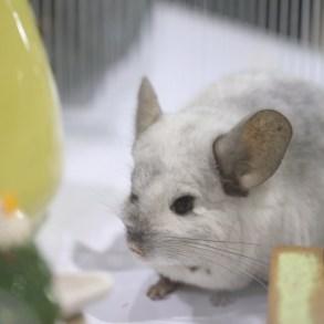 ขอเชิญชวนคนรักสัตว์เที่ยวชมอาณาจักรแห่งสัตว์เลี้ยงเพื่อนรัก  งาน Pet Expo Thailand 2019 15 -