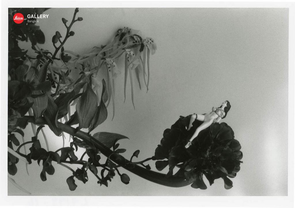 """""""ไลก้า"""" จัด นิทรรศการ Life by Film by Nobuyoshi Araki มองโลกในแบบ โนบุโยชิ อารากิช่างภาพญี่ปุ่นชื่อดัง 15 -"""