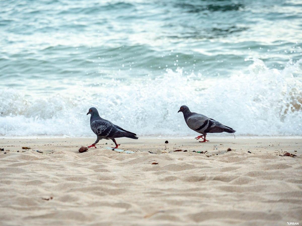 7 ชายหาดทะเลพัทยา ที่ยังสวยสะอาดน่าเที่ยวใกล้กรุงเทพ ไม่ต้องหนีร้อนไปไกล ก็พักได้ ชิลๆ 82 - Beach
