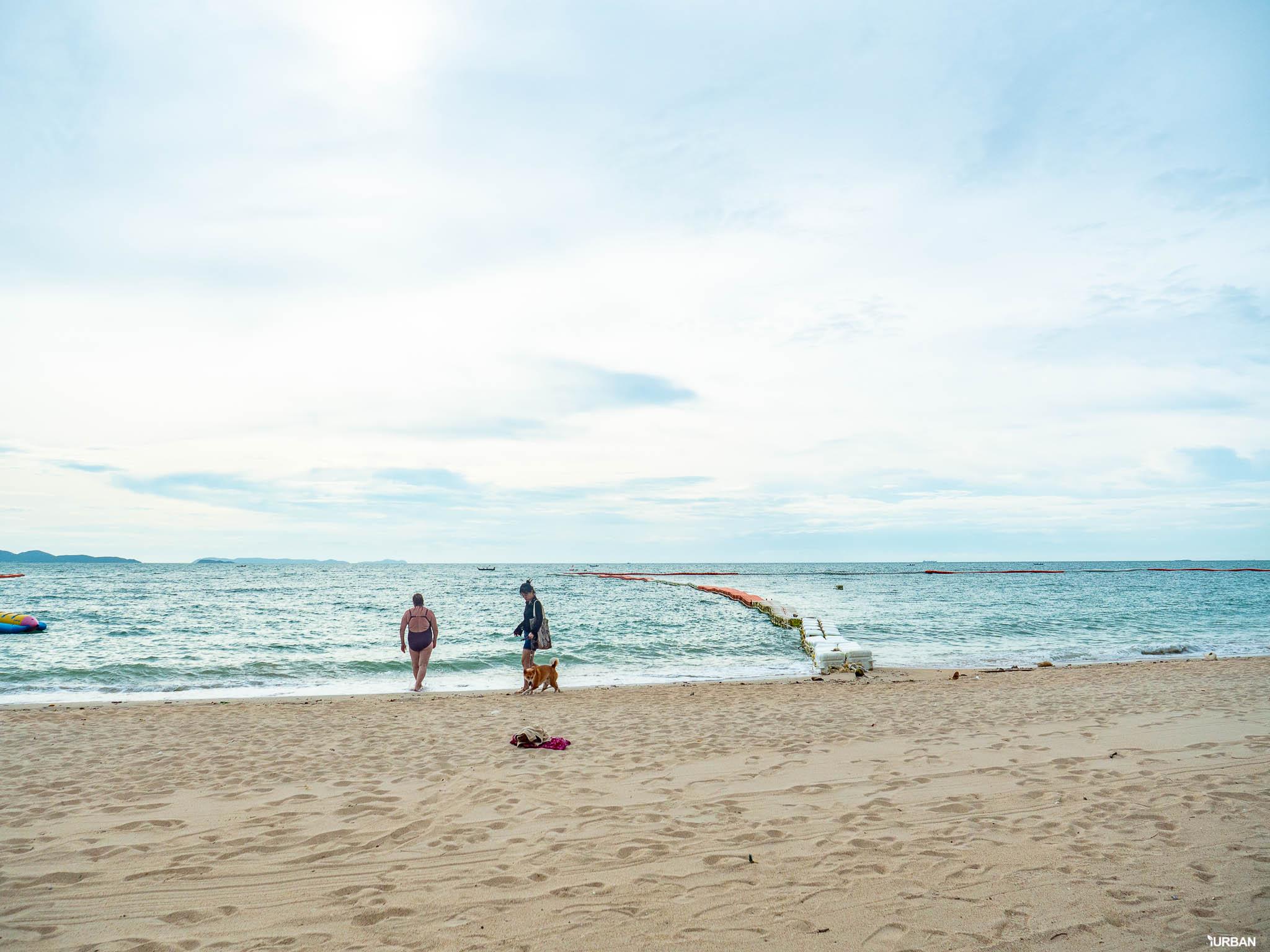 7 ชายหาดทะเลพัทยา ที่ยังสวยสะอาดน่าเที่ยวใกล้กรุงเทพ ไม่ต้องหนีร้อนไปไกล ก็พักได้ ชิลๆ 178 - Beach