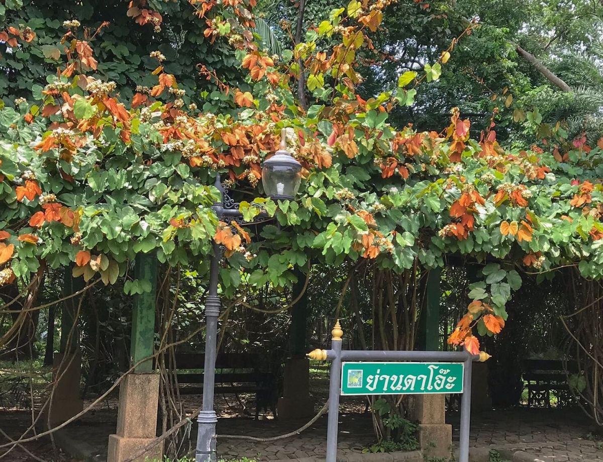 CHECK-IN...10 พิกัดแชะ @3 สวนสวยกลางเมือง ที่สายวิ่ง TMB | ING PARKRUN 2019 ไม่ควรพลาด! 18 -