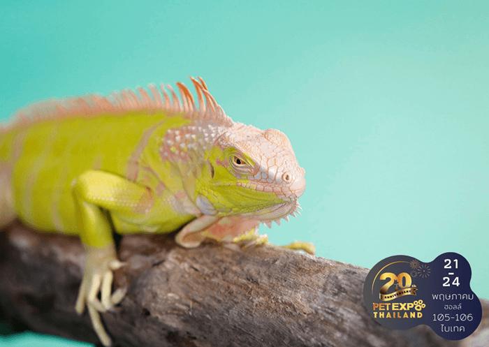 รู้จักนิสัยและวิธีเลี้ยง Exotic Pet เลี้ยงอย่างไรให้สัตว์แฮปปี้ 16 - Exotic Pet
