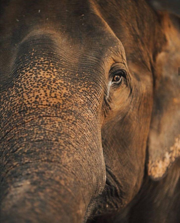 ช้างของชนเผ่ากะเหรี่ยงต้องอดอยากเนื่องจากวิกฤตโควิด-19 13 -