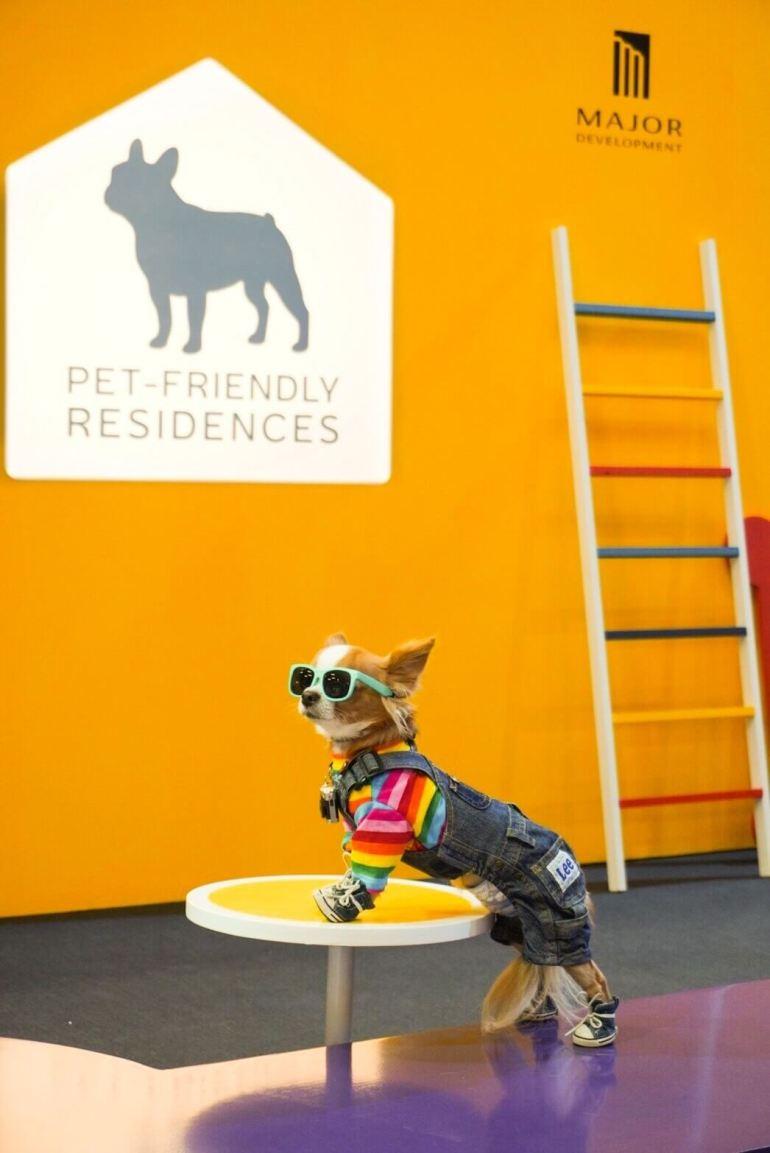 """""""เมเจอร์ ดีเวลลอปเม้นท์"""" ผนึก CPN ตอบโจทย์ไลฟ์สไตล์ลูกบ้าน 360 องศา นำร่องมอบสิทธิพิเศษงาน Dog's Ville 2020 : ADog's Life ตอกย้ำภาพผู้นำคอนโด Pet-friendly 13 - Major Development PCL"""
