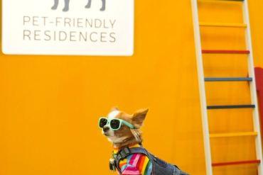 """""""เมเจอร์ ดีเวลลอปเม้นท์"""" ผนึก CPN ตอบโจทย์ไลฟ์สไตล์ลูกบ้าน 360 องศา นำร่องมอบสิทธิพิเศษงาน Dog's Ville 2020 : ADog's Life ตอกย้ำภาพผู้นำคอนโด Pet-friendly 16 - Pet Friendly"""