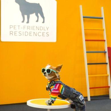 """""""เมเจอร์ ดีเวลลอปเม้นท์"""" ผนึก CPN ตอบโจทย์ไลฟ์สไตล์ลูกบ้าน 360 องศา นำร่องมอบสิทธิพิเศษงาน Dog's Ville 2020 : ADog's Life ตอกย้ำภาพผู้นำคอนโด Pet-friendly 16 - Major Development PCL"""