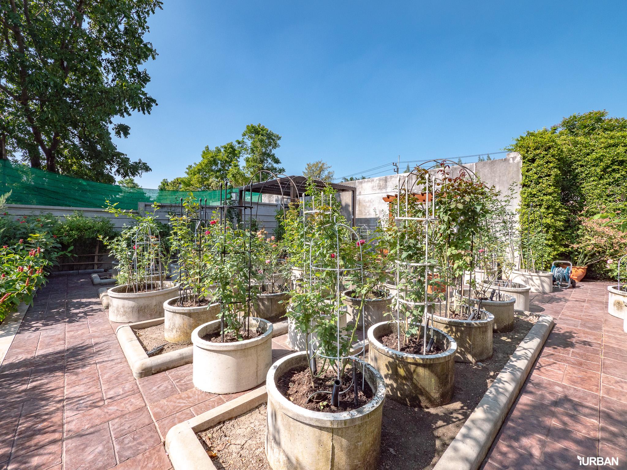 บ้าน SCG HEIM ใหญ่สุดที่เคยรีวิว พร้อมสระ Panoramic บนวิวสวยสุดของสนามกอล์ฟ 43 - Interview