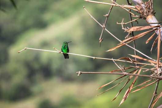 Nature-IvanBellaroba-006