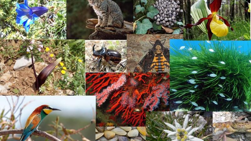I numeri della biodiversità in Italia