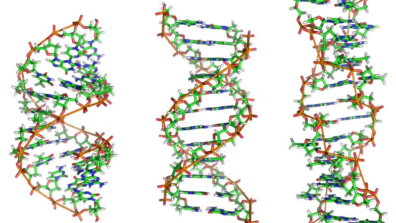 Quanti tipi di DNA ci sono in una cellula?