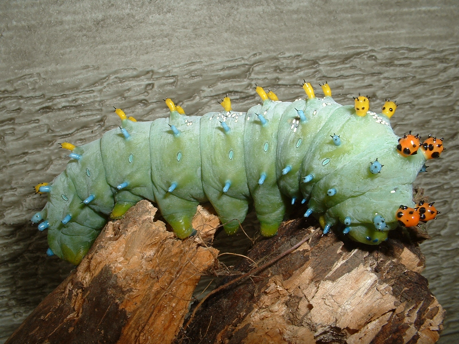 Caterpillar Led Lights