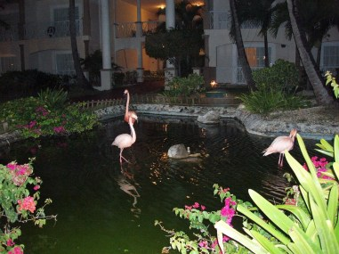 Flamingos in the pond in punta cana