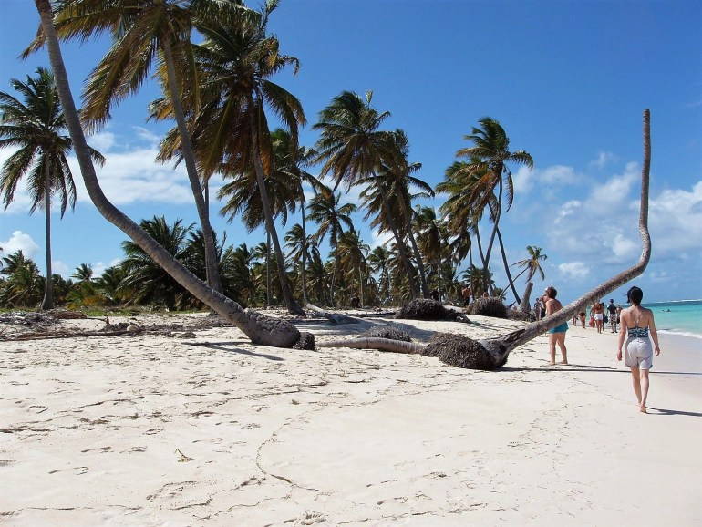 Two palm trees on the beach in punta cana