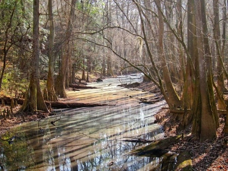 A river in the middle of a forest in South Carolina engulfed by trees.