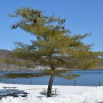 Snow around a pine tree and on top of picnic tables with Sheppard Lake in the background.