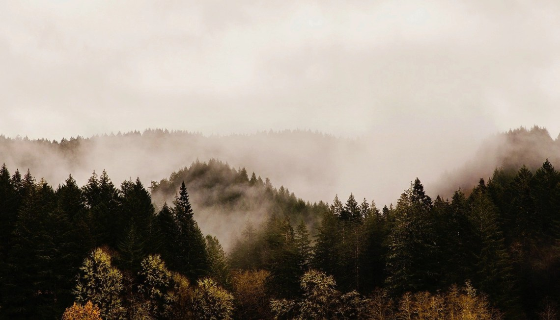 Wild forest in Oregon state engulfed with fog and mist over the tip of the dark, green evergreen trees.