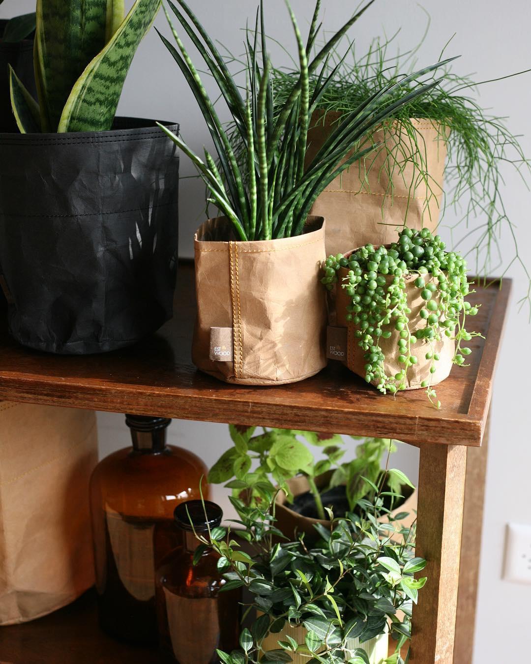 Hârtie elegantă cachapo în interior do-it-yourself Decor Foto