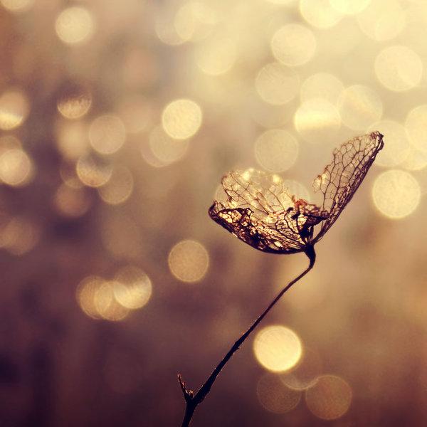 make_a_wish_by_blaumohn-d4i8yj2