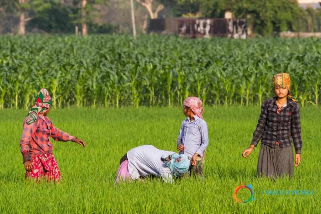 Le donne e le bambine della comunità lavorano nelle risaie