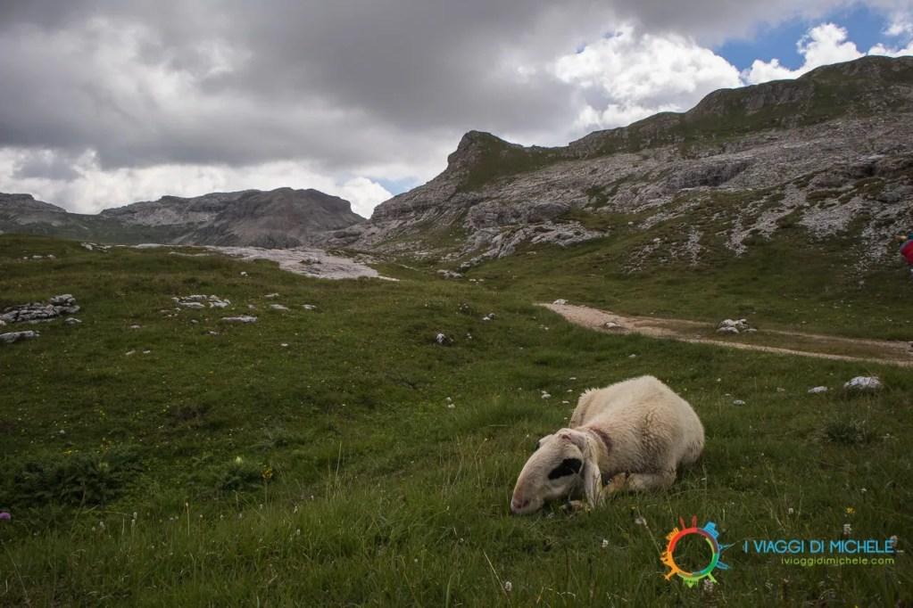 Pecora di Montagna